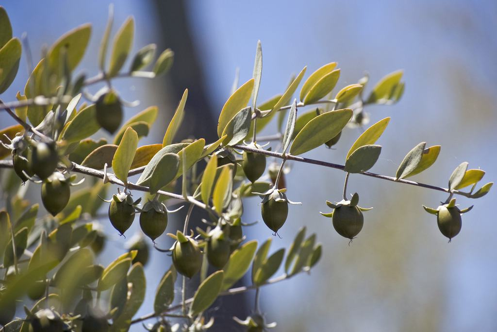 5 Amazing Benefits Olive Oil Has For Your Skin