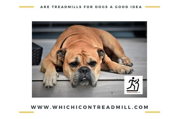 Are Treadmills for Dogs a Good Idea? - pickfairly.com
